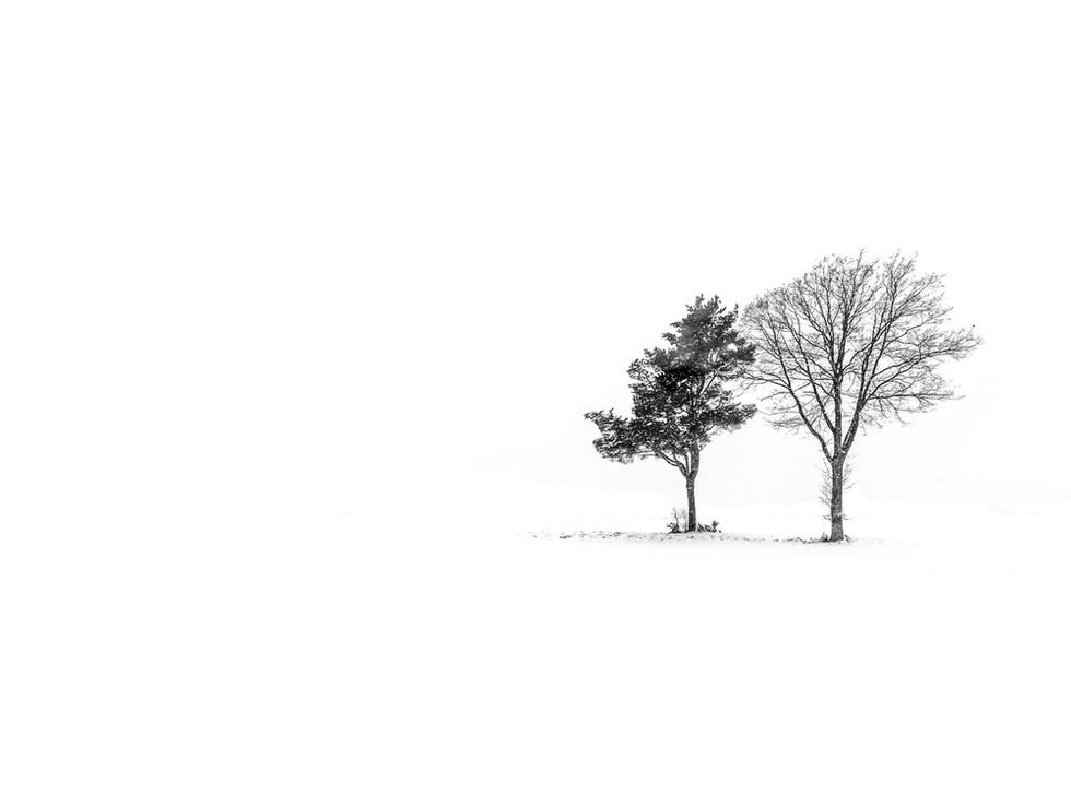 Paysage neige - 001 - 24 décembre 2010 (