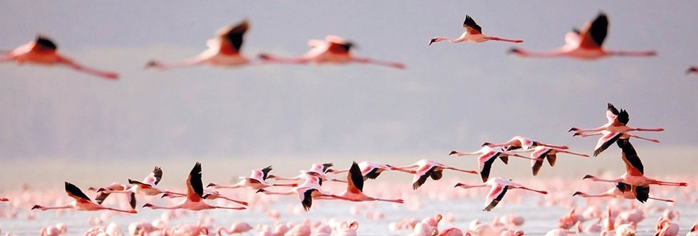 senegal flamingos NatuurenStrandSenegal-