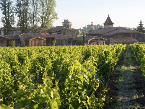 france-wijnveld.jpg