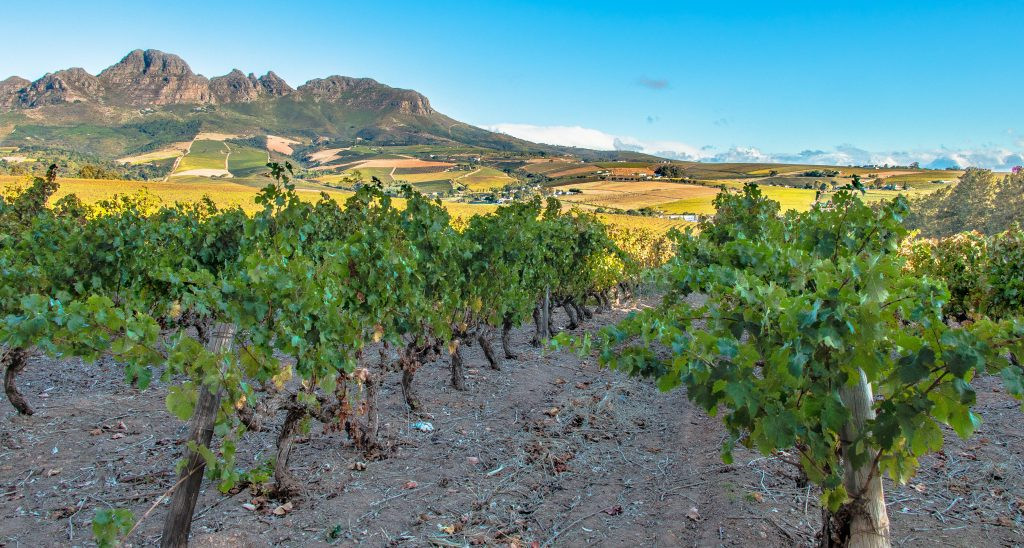zuid afrika stellenbosch-vineyards-and-w
