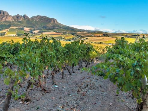 zuid afrika stellenbosch-vineyards-and-w