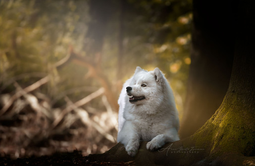 AGF Photography _ Ivy _ Solis Aurora