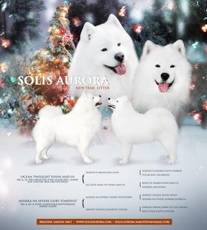 Solis Aurora Advert, New Year Litter