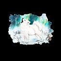 Solis Aurora Samojeden Kennel