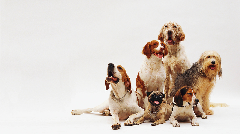 dogs_banner.png
