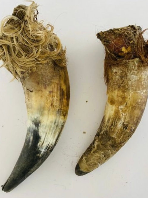 Anco Naturals Cow Horn