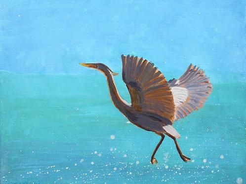 Blue Crane  -  SOLD