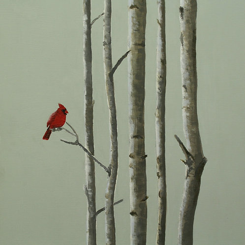 Red Cardinal in a birch tree  -  SOLD