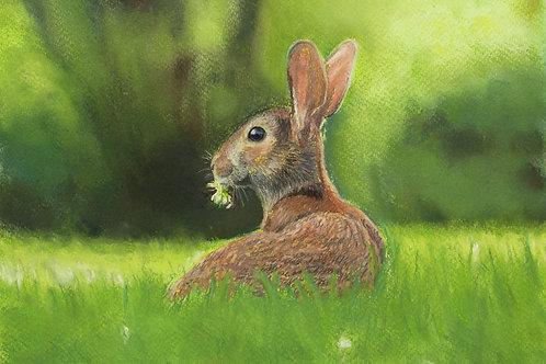 Hare in a Field