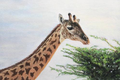 Giraffe on African Savannah