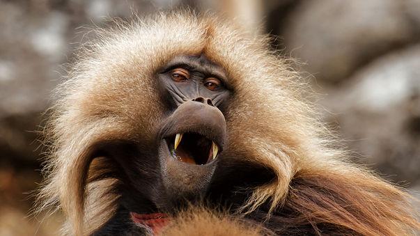 frontiers-in-neuroscience-human-primate-