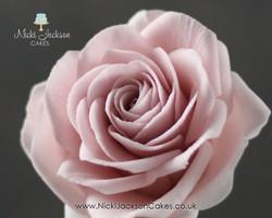 Avalance Rose JPG with Logos