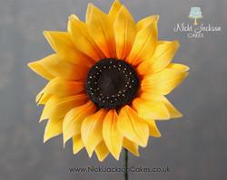 Sunflower JPG with Logos