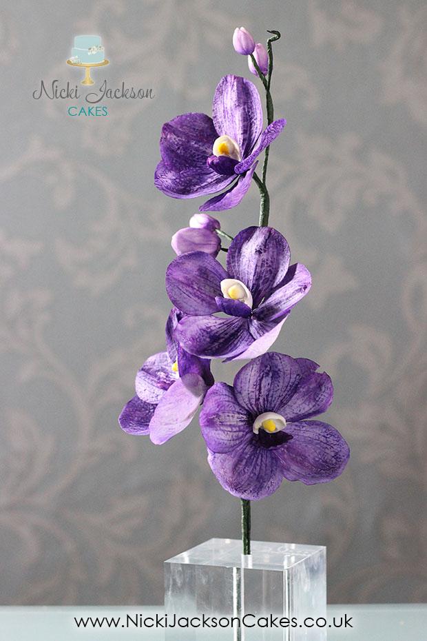 Vanda Orchid JPG with Logos