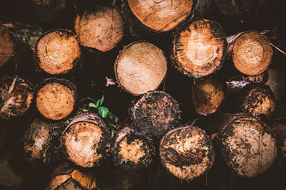 Logs harvested from sustainable trees