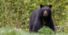 Black Bear Energy Program