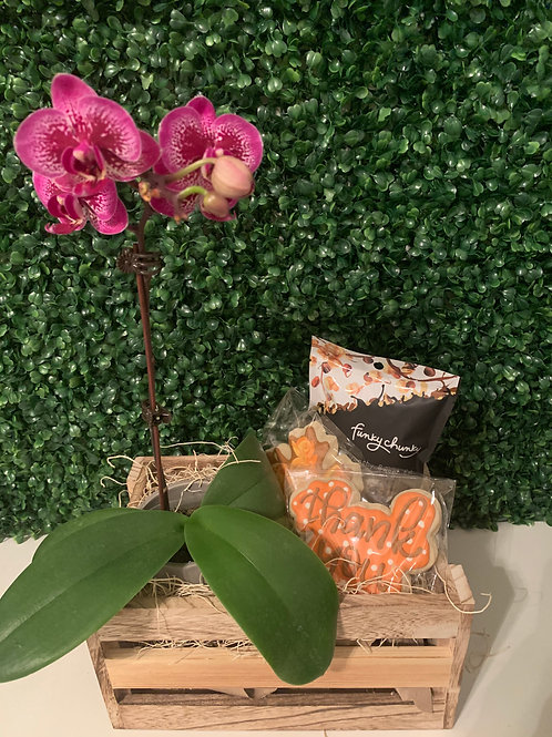 Fall Collection | Orchid, Cookies & Chocolate