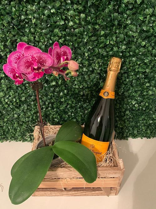 Orchid & Veuve Cliquot