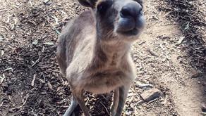 Moving to Australia!