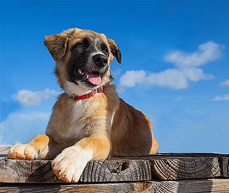 animal rescue and adoption Turks Caicos, potcake
