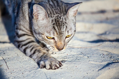 pets, animals, potcakes, Turks, Caicos