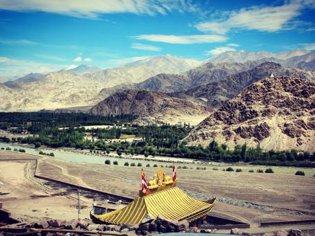 Ladakh: in the snow leopard's lair