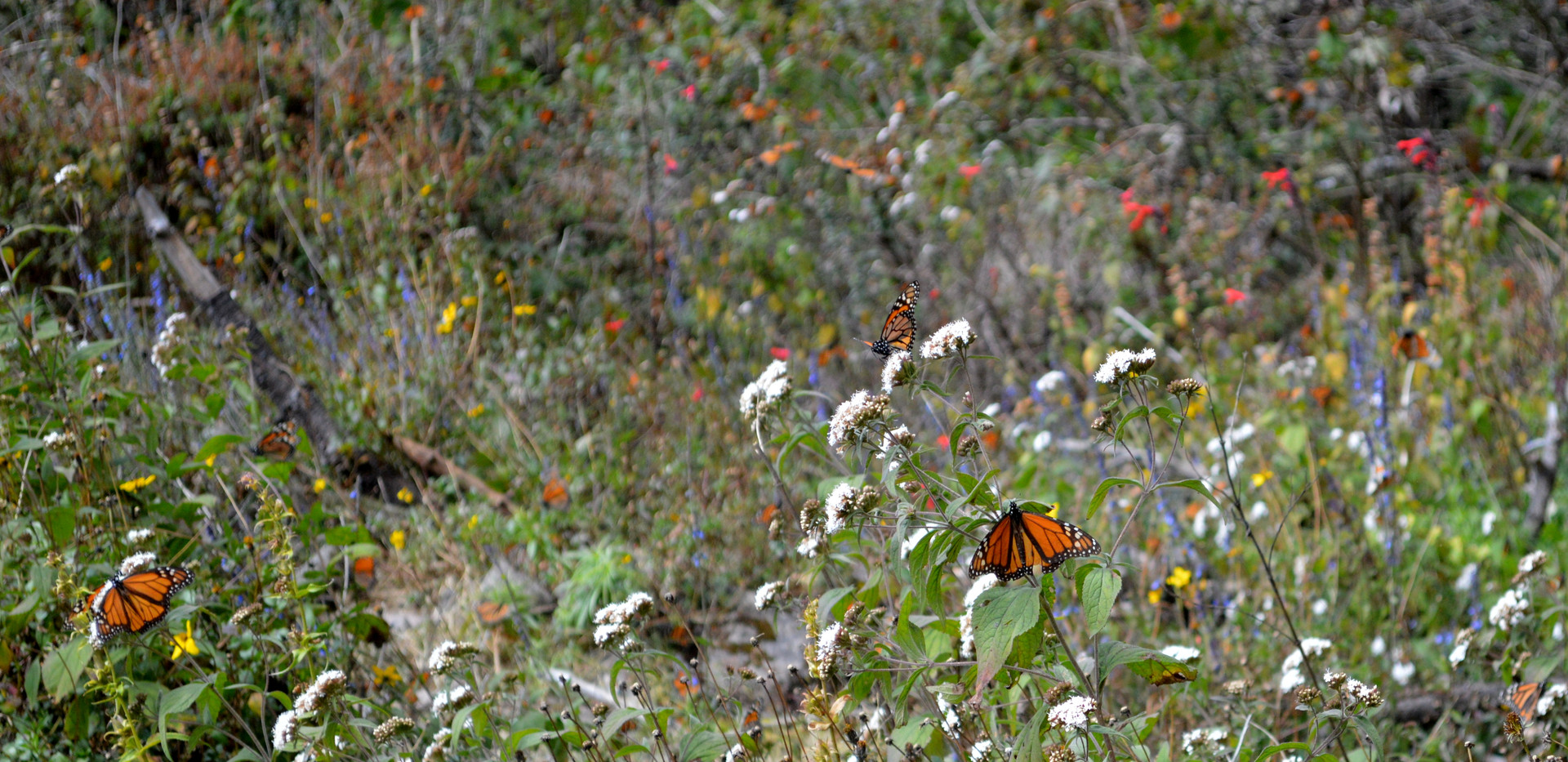 Sierra Chincua Monarch Butterfly Reserve