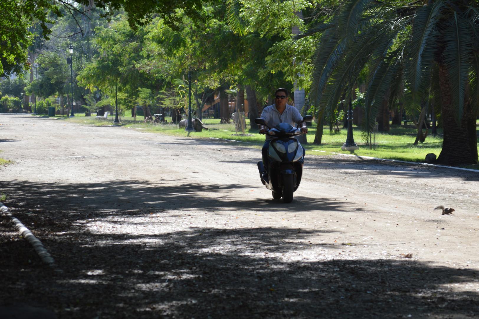 Los Mochis, Sinaloa (13).JPG