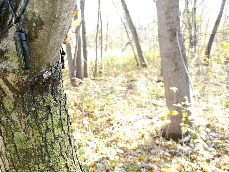 Josh Paul bison tree.jpg