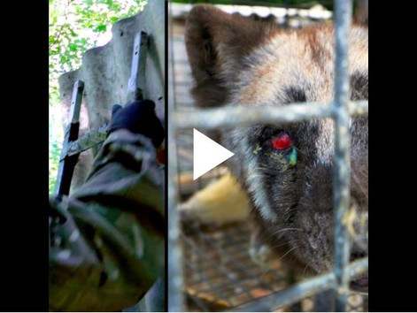 Erfolg: SOKO Tierschutz gewinnt Prozess gegen Polens mächtigsten Pelztierfarmer