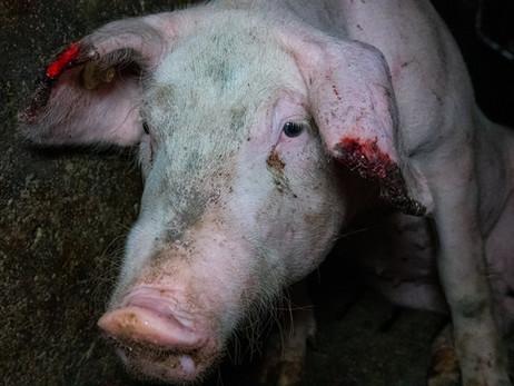 Tierschutz-Skandal in badischem Lobbyistenstall