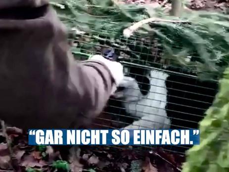 Update im Fall der grausamen Katzentötung