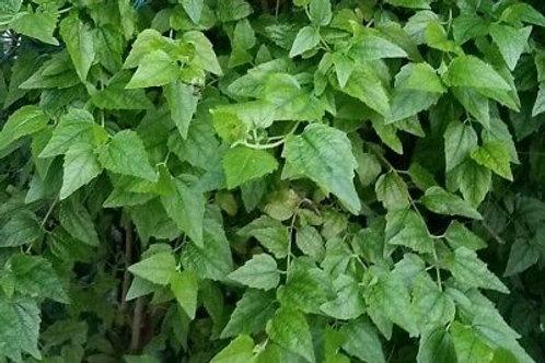 Abre Camino Herb