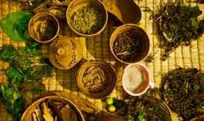 6-Month Spiritual African Materia Medica Certificate Training