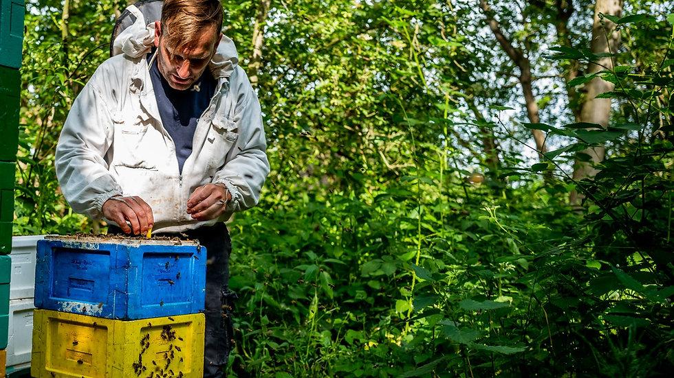 Buckfast bijenvolk (2021) op MINI PLUS kast
