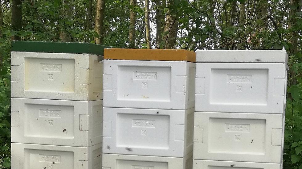 Overwinterd Buckfast bijenvolk  (2020) op MINI PLUS kast