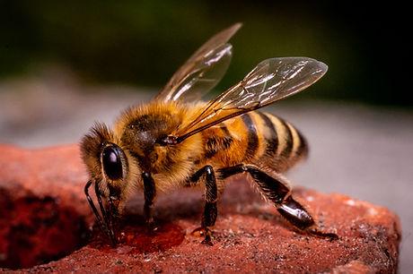 Beeworld Hoge Resolutie-329.jpg