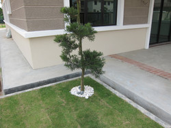 Manicured Front Lawn Landscaped Garden