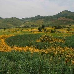 Meskel Simien Mountains - Ethiopia