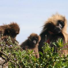 Simien Mountains - Ethiopia