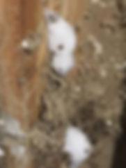 Termite foam