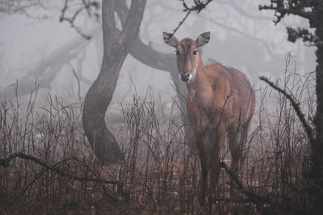 A foggy morning.jpg
