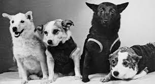 Soviet space dogs Strelka, Zvezdochka, Chernushka, and Belka