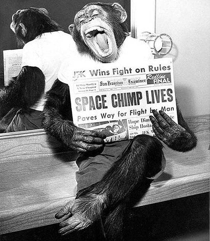 Space chimp Ham holding newspaper after his successful flight