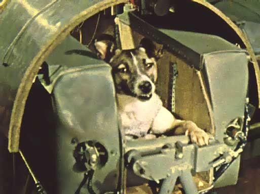 Soviet space dog Laika in Sputnik 2