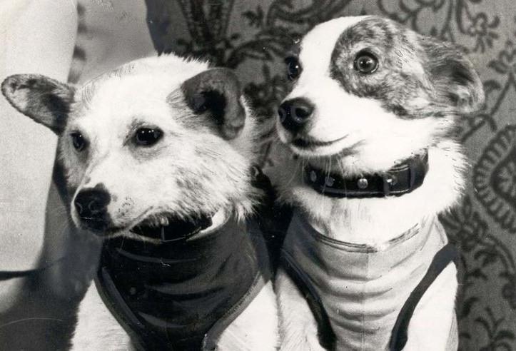 Soviet space dogs Belka and Strelka