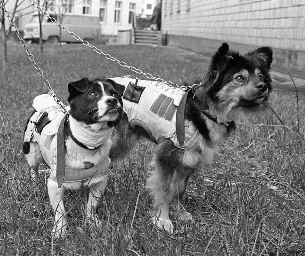 Soviet space dogs Veterok and Ugolyok