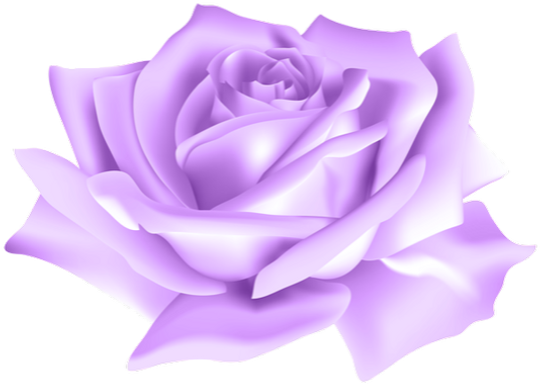 Purple_Rose_Flower_PNG_Clip_Art_Image_ed