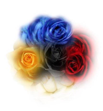 sacred rose logo 0.jpg