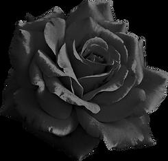 black-rose.png